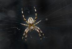 φοβερή αράχνη νύχτας εικόνα& Στοκ Εικόνες