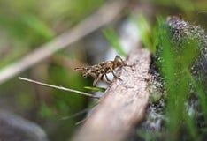 Φοβερό έντομο κανθάρων Στοκ φωτογραφίες με δικαίωμα ελεύθερης χρήσης