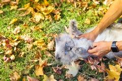 Φοβησμένη γάτα στο έδαφος εσωτερικό E στοκ φωτογραφία με δικαίωμα ελεύθερης χρήσης