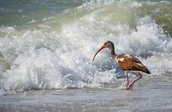 φοβισμένα όχι κύματα Στοκ Εικόνες
