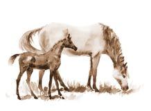 Φοράδα και foal watercolor σεπιών στο λευκό απεικόνιση αποθεμάτων