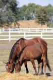 Φοράδα και foal Στοκ εικόνα με δικαίωμα ελεύθερης χρήσης