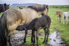 Φοράδα και foal Στοκ φωτογραφία με δικαίωμα ελεύθερης χρήσης