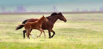 Φοράδα και foal στοκ εικόνα