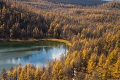 Φοράδα κορυφογραμμών ‹â€ ‹εξογκωμάτων †σε Arshaan Στοκ φωτογραφίες με δικαίωμα ελεύθερης χρήσης