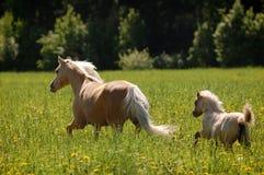 Φοράδα με συμπαθητικό foal Στοκ φωτογραφία με δικαίωμα ελεύθερης χρήσης
