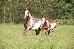 Φοράδα με foal που τρέχει στην ελευθερία Στοκ εικόνες με δικαίωμα ελεύθερης χρήσης