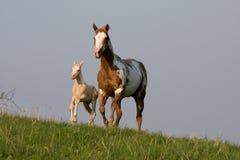 Φοράδα με foal το τρέξιμο Στοκ φωτογραφία με δικαίωμα ελεύθερης χρήσης