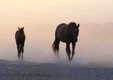 Φοράδα με foal Στοκ Εικόνες