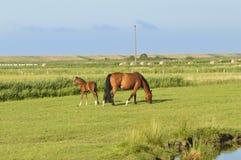 Φοράδα με foal Στοκ φωτογραφίες με δικαίωμα ελεύθερης χρήσης