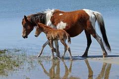 Φοράδα & foal Στοκ Εικόνες
