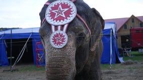 Φορητός πυροβολισμός του ελέφαντα καρναβαλιού στην έκθεση νομών φιλμ μικρού μήκους