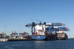Φορτηγά πλοία βοτανικής και εμπορευματοκιβωτίων λιμένων Στοκ φωτογραφία με δικαίωμα ελεύθερης χρήσης