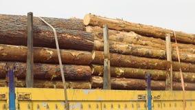 Φορτηγό αναγραφών με το πλήρες φορτίο των κομμένων δέντρων, πλήρες φορτηγό κούτσουρων σωμάτων απόθεμα βίντεο