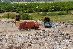 Φορτηγό που λειτουργεί στα υλικά οδόστρωσης με τα πουλιά που ψάχνουν τα τρόφιμα Απορρίματα στην απόρριψη πόλεων Εδαφολογική ρύπαν Στοκ Εικόνες
