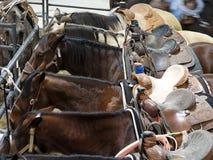 Φορτωμένα άλογα που δένονται σε έναν φράκτη μετάλλων στοκ φωτογραφία