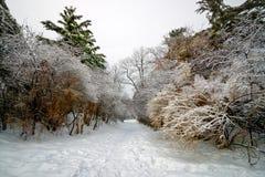 φορτωμένα παγετός δέντρα μονοπατιών μολύβδων Στοκ φωτογραφία με δικαίωμα ελεύθερης χρήσης