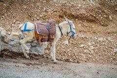 Φορτωμένες στάσεις γαιδάρων στην περιοχή βουνών, Ισραήλ στοκ φωτογραφία
