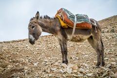 Φορτωμένες στάσεις γαιδάρων στην περιοχή βουνών, Ισραήλ στοκ εικόνες
