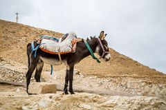 Φορτωμένες στάσεις γαιδάρων στην περιοχή βουνών, Ισραήλ στοκ φωτογραφίες με δικαίωμα ελεύθερης χρήσης