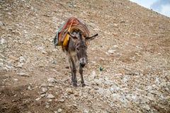 Φορτωμένες στάσεις γαιδάρων στην περιοχή βουνών, Ισραήλ στοκ εικόνα με δικαίωμα ελεύθερης χρήσης