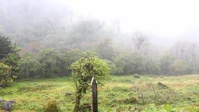 Φορτωμένη υγρασία κίνηση σύννεφων πέρα από το τροπικό δάσος απόθεμα βίντεο