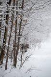 Φορτωμένη χιόνι γραμμή αποβαλλόμενων δέντρων το χιονισμένο οδικό τοπίο Στοκ φωτογραφίες με δικαίωμα ελεύθερης χρήσης