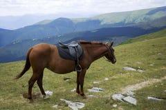 Φορτωμένο άλογο κάστανων Στοκ Εικόνα