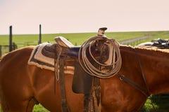 Φορτωμένο άλογο κατά τη στενή επάνω άποψη στοκ εικόνες με δικαίωμα ελεύθερης χρήσης