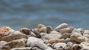 φορτωμένο αεράκι βυτιοφόρο θάλασσας πετρελαίου φιλμ μικρού μήκους