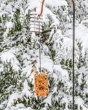 Φουντωτό Titmouse, χειμώνας στοκ εικόνες