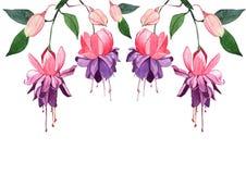 Φούξια hand-drawn απεικόνιση watercolor Όμορφοι ρόδινοι λουλούδια και οφθαλμοί που απομονώνονται σε ένα άσπρο υπόβαθρο Στοκ φωτογραφίες με δικαίωμα ελεύθερης χρήσης