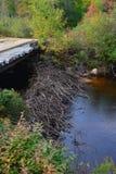 Φράγμα καστόρων κάτω από τη γέφυρα Στοκ Εικόνες