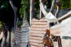 Φράκτες των Φιλιππινών Στοκ Φωτογραφία