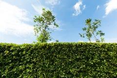 Φράκτης δέντρων Στοκ φωτογραφία με δικαίωμα ελεύθερης χρήσης