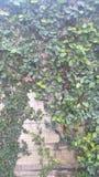 Φράκτης δέντρων Στοκ Εικόνες