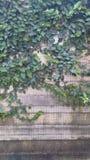 Φράκτης δέντρων Στοκ εικόνες με δικαίωμα ελεύθερης χρήσης