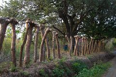 Φράκτης εθνικών οδών κολοβωμάτων δέντρων στοκ εικόνες