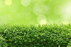 Φράκτης κήπων Στοκ φωτογραφίες με δικαίωμα ελεύθερης χρήσης