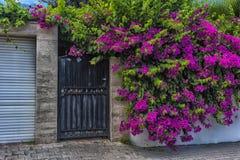 φράκτης και ρόδινα λουλούδια στοκ φωτογραφία με δικαίωμα ελεύθερης χρήσης