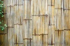 Φράκτης μπαμπού με τις εγκαταστάσεις Στοκ Εικόνες