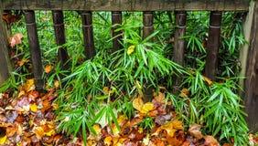 Φράκτης φθινοπώρου στοκ εικόνες με δικαίωμα ελεύθερης χρήσης