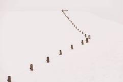 Φράκτης χώρας στο χιόνι Στοκ Εικόνες