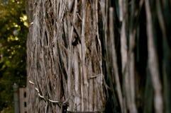 Φράκτης Bushyard Στοκ Φωτογραφία