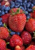 φράουλα αγιοκλημάτων Στοκ Φωτογραφία