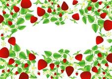 φράουλα ανασκόπησης Στοκ Φωτογραφίες