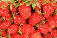 φράουλα ανασκόπησης Στοκ Εικόνες
