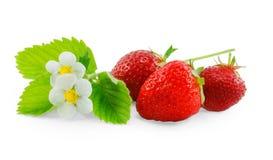 φράουλα και λουλούδι που απομονώνονται στο άσπρο υπόβαθρο Στοκ Φωτογραφία