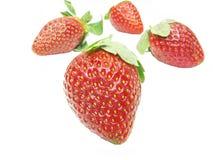 φράουλα κινηματογραφήσ&epsil Στοκ εικόνα με δικαίωμα ελεύθερης χρήσης