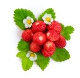 Φράουλα που απομονώνεται Στοκ φωτογραφία με δικαίωμα ελεύθερης χρήσης